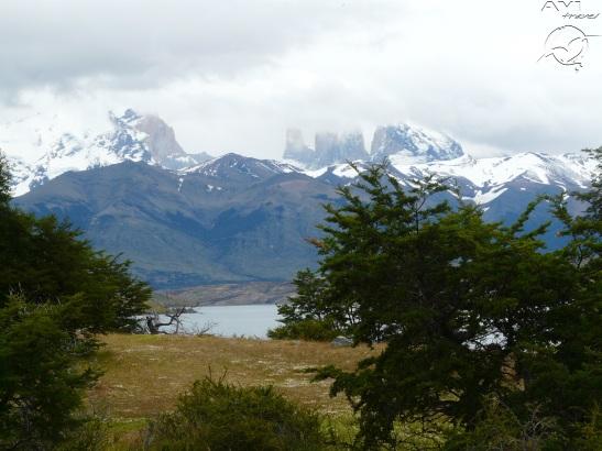 10-jan Torres del Paine (108)